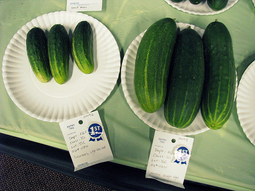 blue ribbon cukes