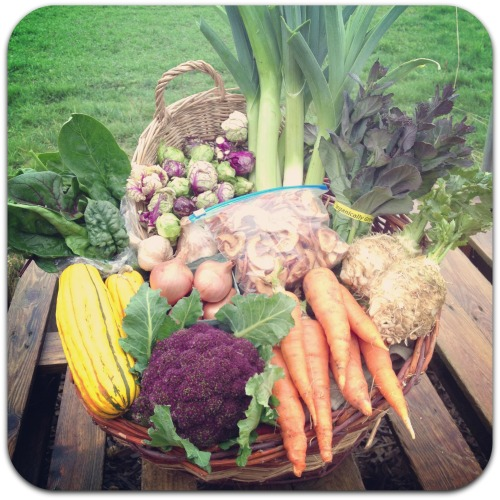 winter csa share week 8