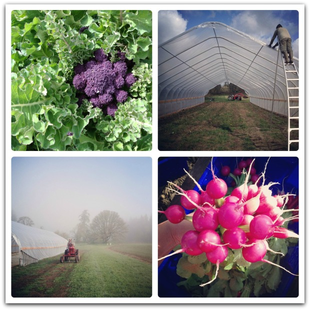 april farm collage2