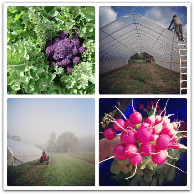 april farm collage2