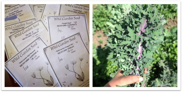 winter planning and csa harvest