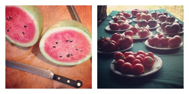 watermelon and tomatoes