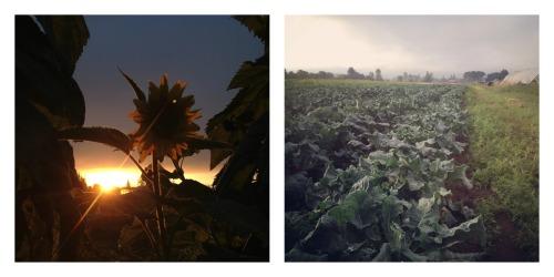 sunrise and broccoli
