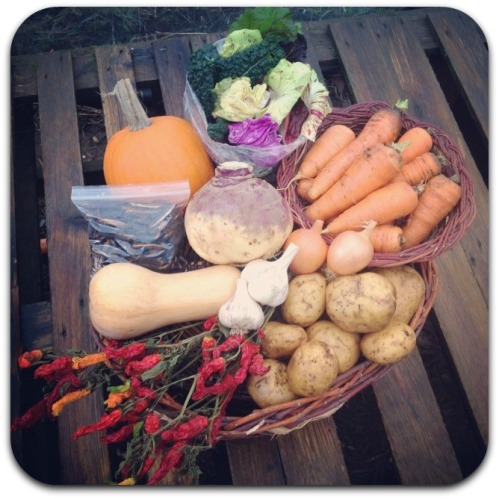 winter csa share week 2