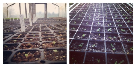 germination Collage