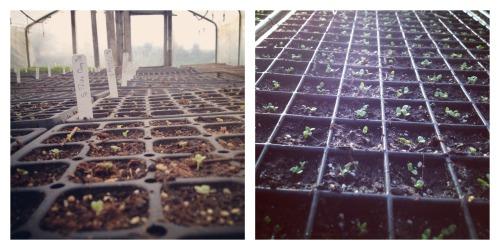 germination Collage