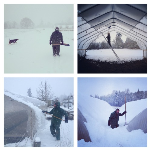 snow and field houses
