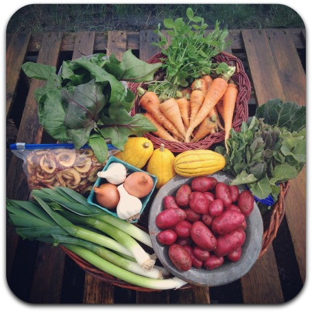winter csa share week 9