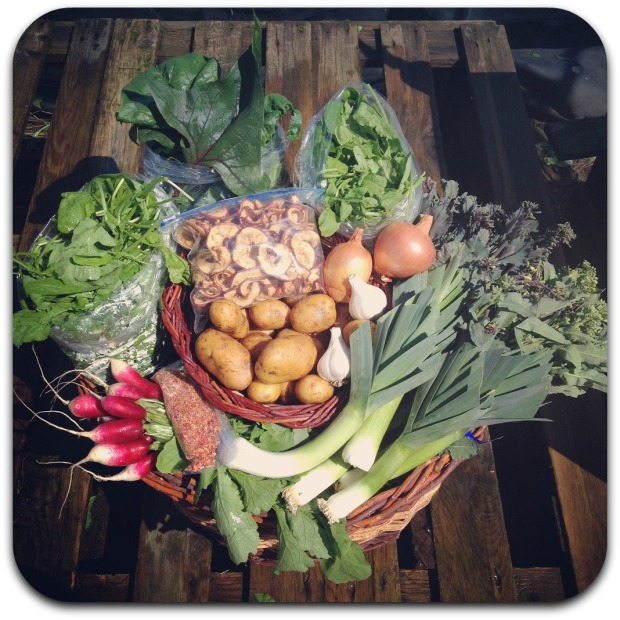 winter csa share week 10